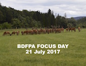 BDFPA Focus Day (link to pdf)